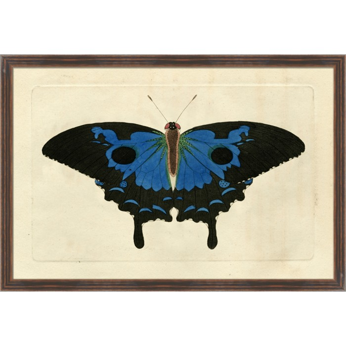 Naturalists Moth VIII